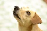 Tests für Hundefutter – unverzichtbar oder überflüssig?