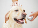 Der Hund stinkt – was tun gegen Hundegeruch?