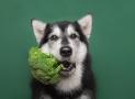 Hunde vegan ernähren: Ist das artgerecht?