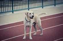 Selbsthilfe bei zu dicken Hunden