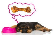 Hund frisst nicht – was tun?