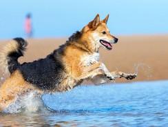Nahrungsmittel für eine gesunde Darmflora beim Hund