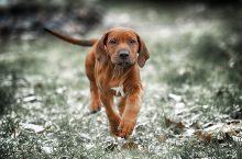 Hund zittert – mögliche Ursachen und was Sie tun können