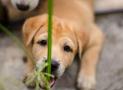 Der Hund frisst Gras – mögliche Ursachen und Lösungen