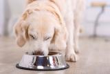 Hund trinkt viel – Ursachen für das Verhalten