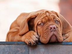 8 Mythen der Hunde Ernährung