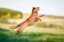 Hundefutter im Internet bestellen