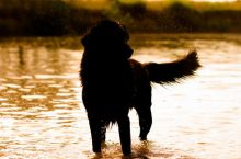 Hundefutter spenden – wo und was beachten?
