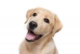 Innereien sind wichtig in der Hunde Ernährung