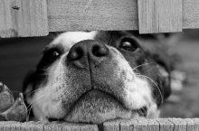 Konservierungsstoffe im Hundefutter