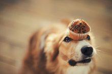 Essensreste sind kein geeignetes Hundefutter