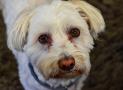 Tränenflecken beim Hund – das kann man tun